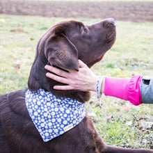 pettsie-hemp-dog-collar-bandana-matching-friendship-bracelet-gift-box-features-bruno