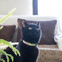 pettsie-green-cat-collar-matching-friendship-bracelet-cats