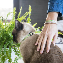 pettsie-green-cat-collar-matching-friendship-bracelet-kitty