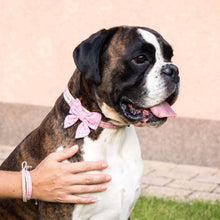 Dog collar with bow tie & matching friendship bracelet, pet-friendly hemp, strong D-ring