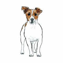 Jack Russell illustration by Tiff Howick