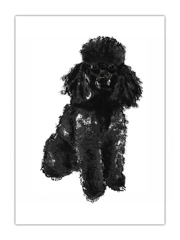 Poodle illustration by Tiff Howick available as art prints and greeting cards