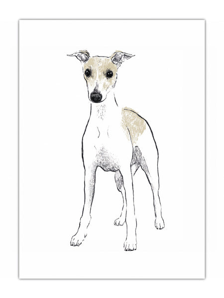 Whippet illustration by Tiff Howick available as art prints, greeting cards, tea towel