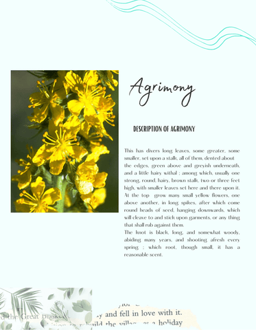Agrimony herb for jaundice, bowel healing, wounds, joints