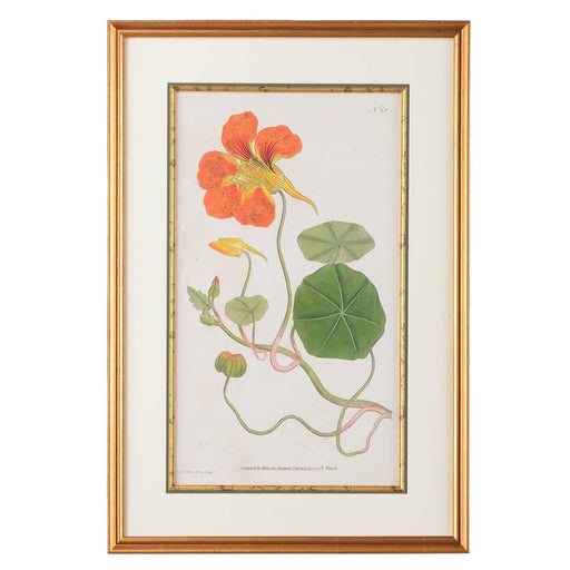 Nasturtium Botanical Print - CHELSEA HOUSE - The Shops at Mount Vernon