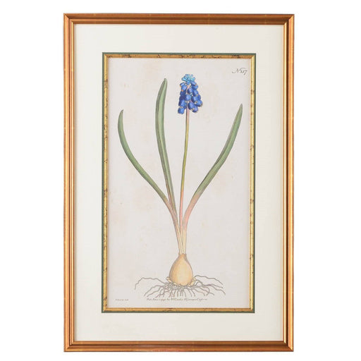 Grape Hyacinth Botanical Print - CHELSEA HOUSE - The Shops at Mount Vernon