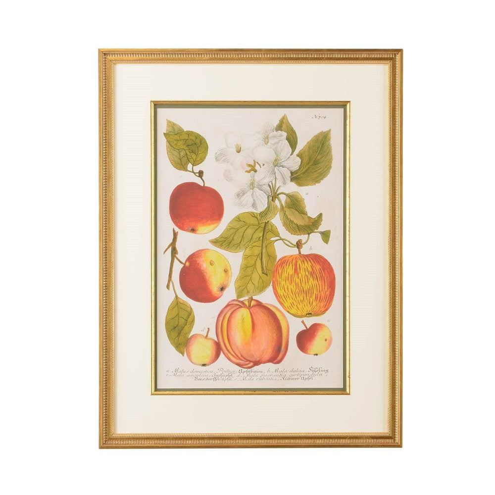 Paradise Apple Botanical Print - CHELSEA HOUSE - The Shops at Mount Vernon