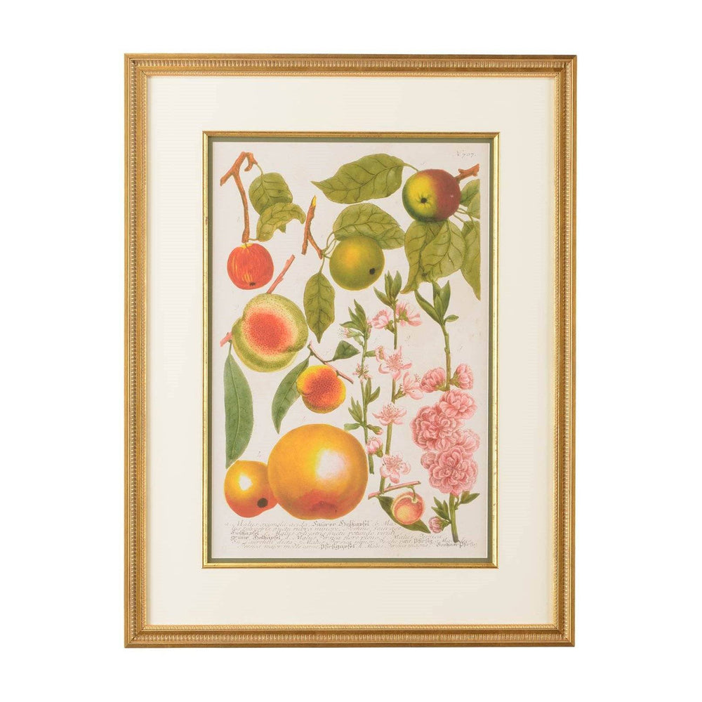 European Crabapple Botanical Print - CHELSEA HOUSE - The Shops at Mount Vernon