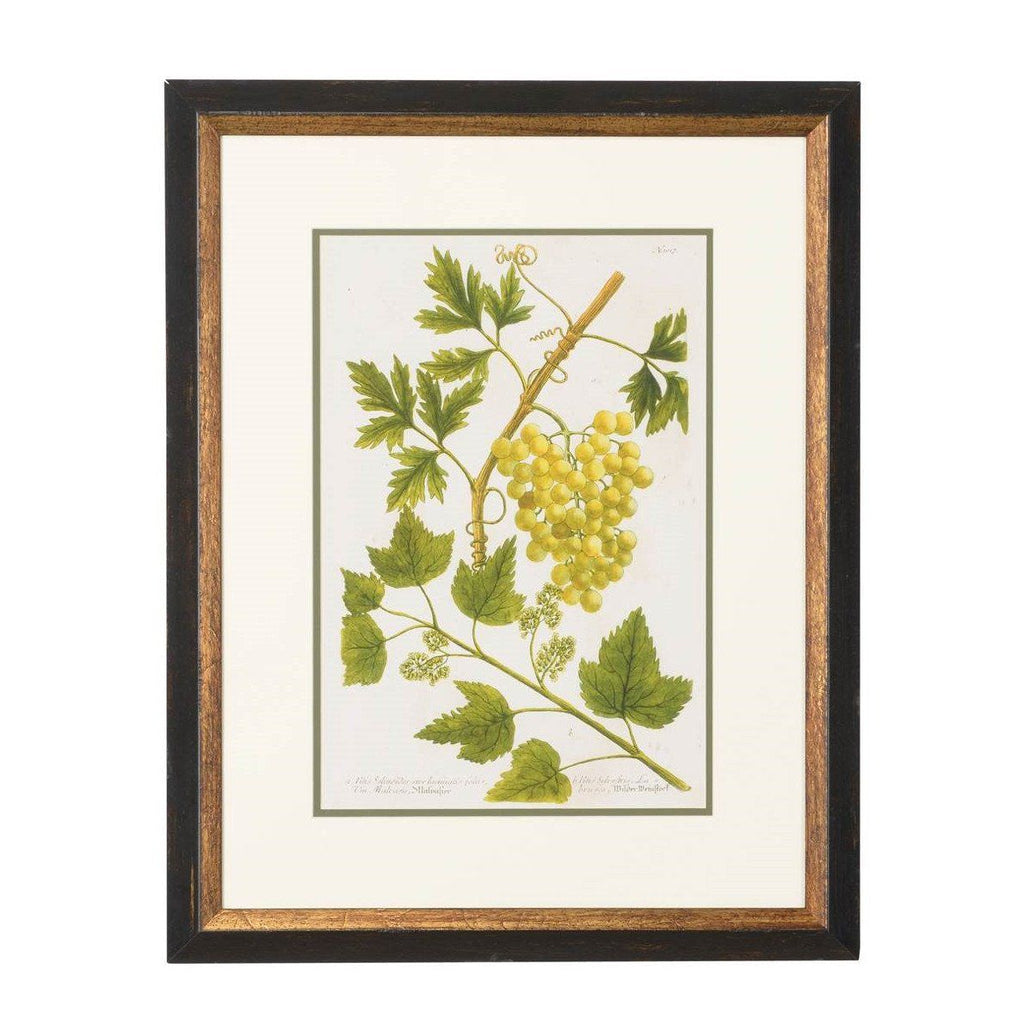Green Grape Vine Botanical Print
