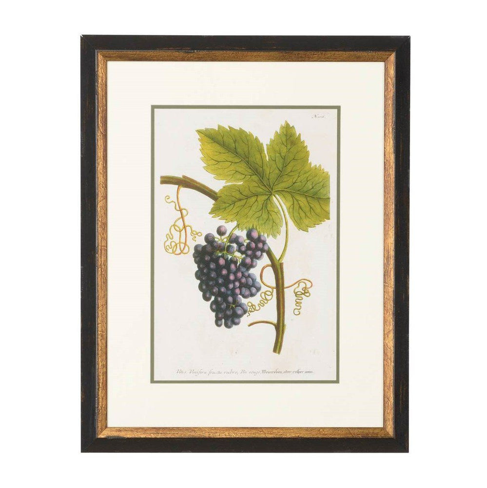 Red Grape Vine Botanical Print - The Shops at Mount Vernon - The Shops at Mount Vernon