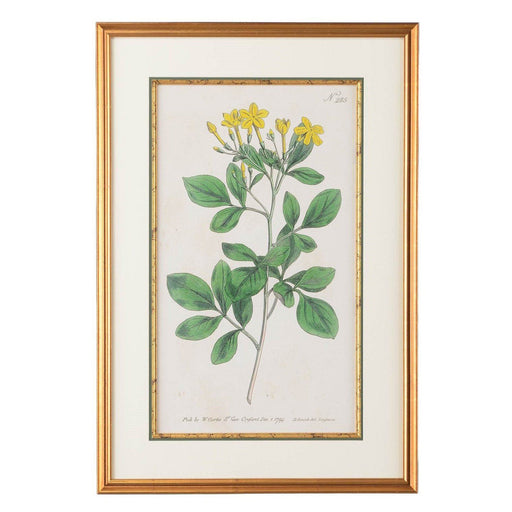 Sweetest Jasmine Botanical Print - CHELSEA HOUSE - The Shops at Mount Vernon