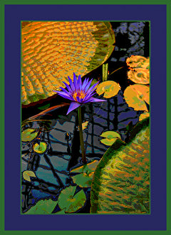 GALLERY ART COLLECTION - PURPLE WATER LILLY