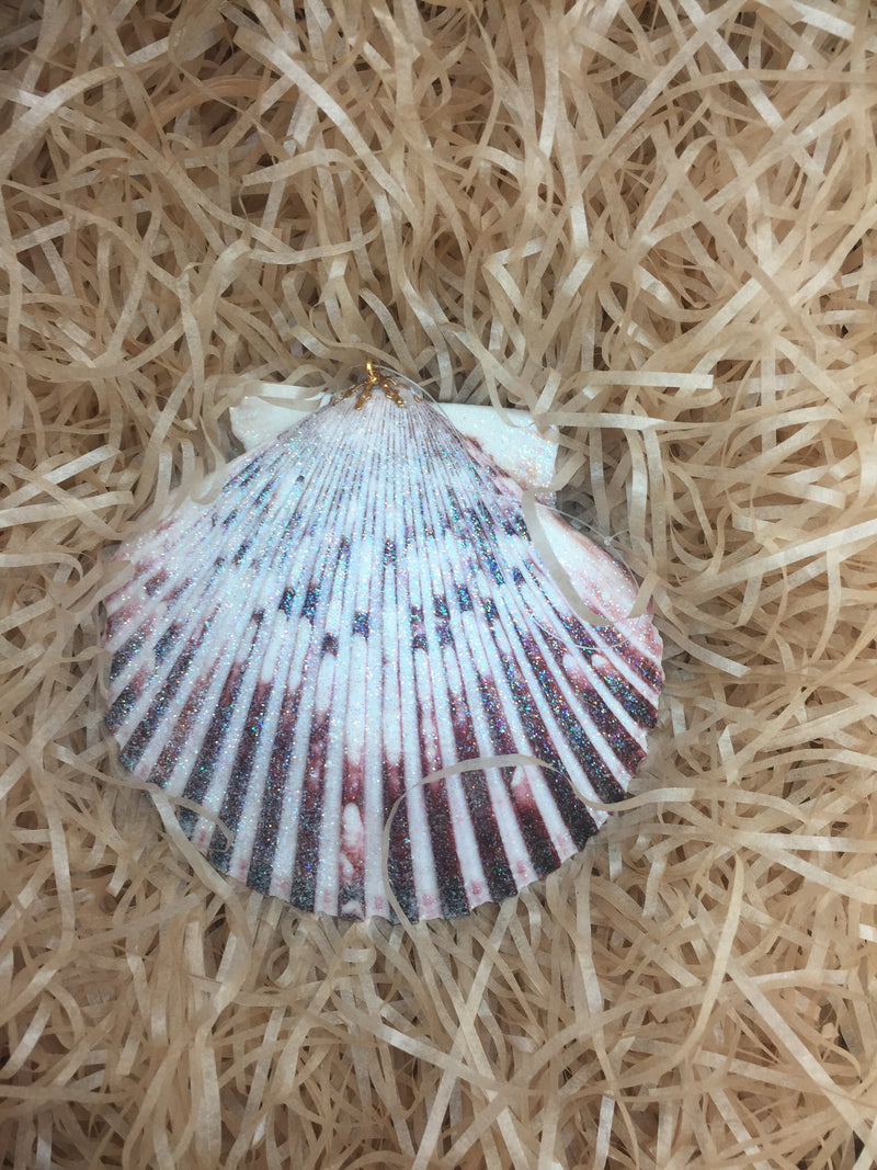 Small withe pecten Albican shell