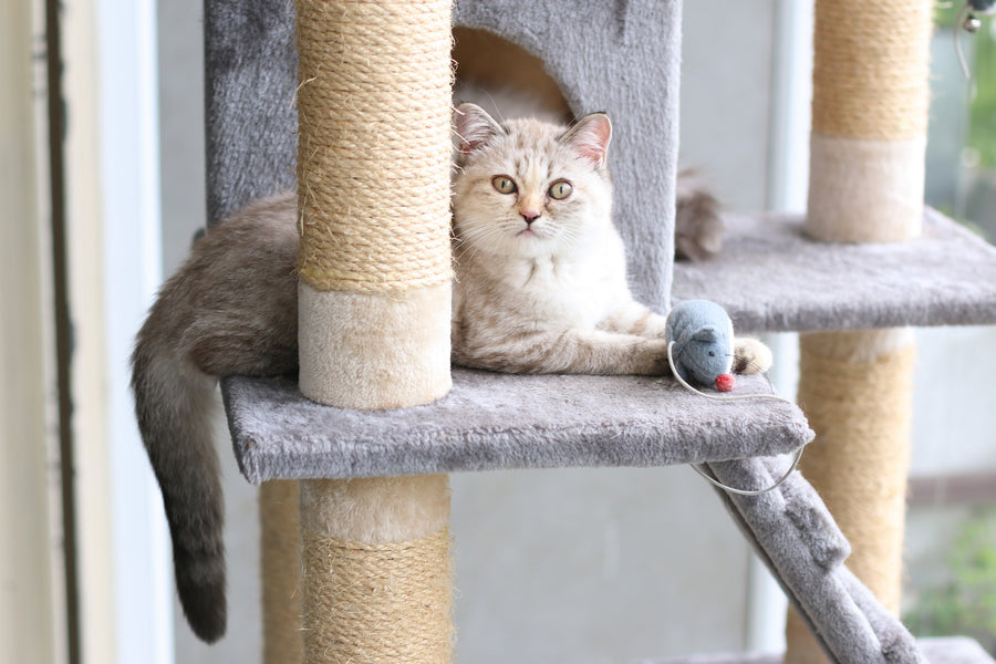 15 Ways to Exercise Your Indoor Cat (And Why It's so Important)