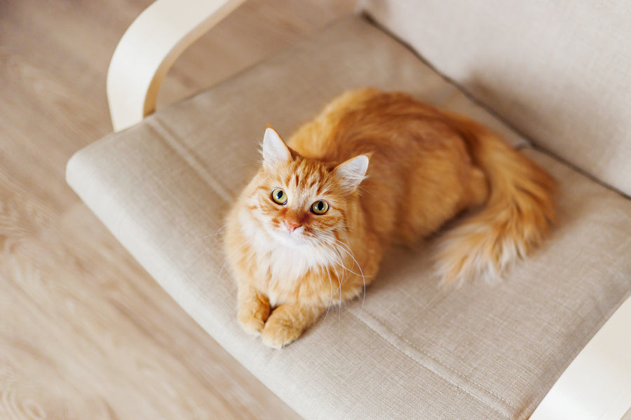 Weird Cat Behavior: What Does it Mean?