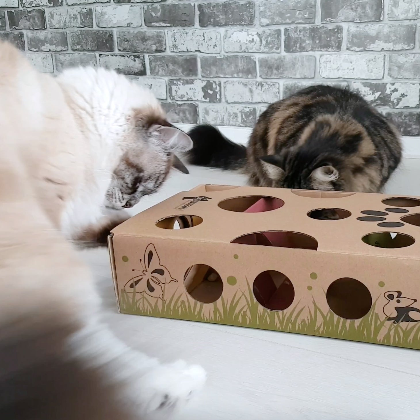 Amazing Cat: Best Interactive Toy For Cats & Kittens