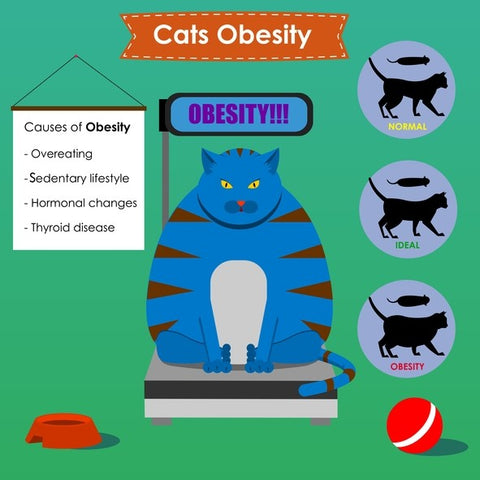 cat obesity infograph