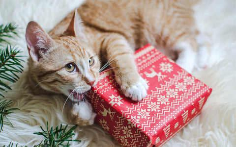 best christmas gifts for cats