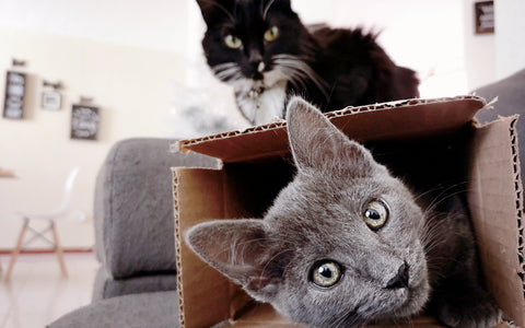 why cats like boxes