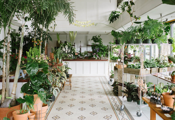 Botanical Fever: Our top 5 plant shops in PDX – City Home on attractions near me, beauty salon near me, fishing near me, swimming pool near me, gardens near me, factories near me, sauna near me, beach near me, malls near me, lounges near me,