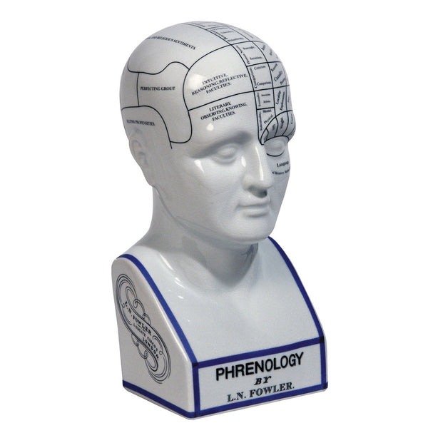 Ceramic Phrenology Head Desk Model - City Home - Portland Oregon - Furniture and Home Decor