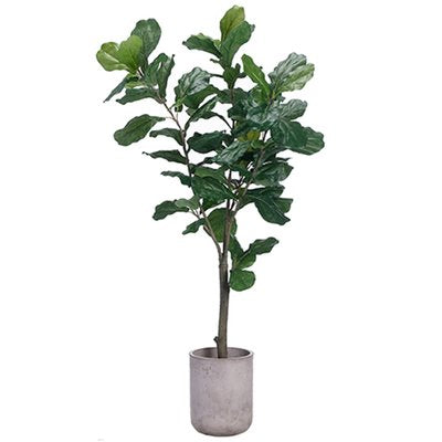 Faux Fig Silk Tree Plant w/ Planter - City Home - Portland Oregon - Furniture and Home Decor