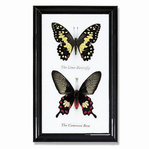 Butterfly Double Specimens - City Home - Portland Oregon - Furniture and Home Decor