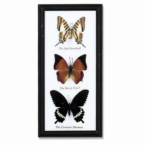 Butterfly Triple Specimens - City Home - Portland Oregon - Furniture and Home Decor