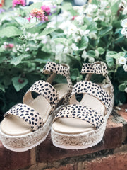 Bryce Platforms- Cheetah