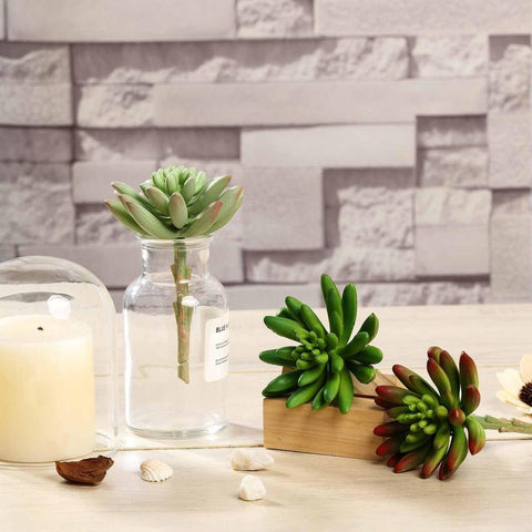 New Arrivals: Four Reasons Why Our Succulents Are a Must-Have