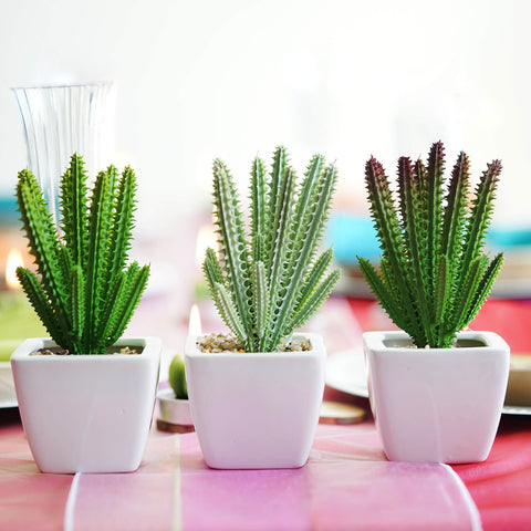 Cinco de Mayo Cacti Centerpiece