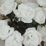 96 Giant Open Rose Bush - Cream