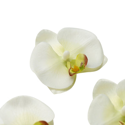 20pcs | 4inch Cream Butterfly Orchid Artificial Flower Heads, DIY Craft Silk Flowers