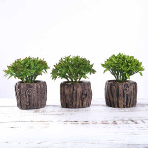 "Set of 3 | Assorted Fake Succulents in Pot | 6"" Assorted Aeonium Artificial Plants with Pots"