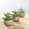 "Set of 3 | Assorted Fake Succulents in Pot | 5"" Assorted Aloe Varietal Artificial Plants with Pots"