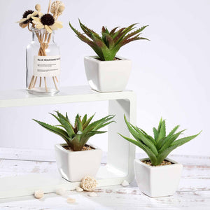 "Assorted Fake Succulents in Pot | 5"" Assorted Spotted Aloe Vera Artificial Plants with Pots"
