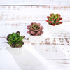Set of 3 | Assorted Fake Succulents in Pot | 3'' Assorted Mini Echeveria Artificial Plants with Pots