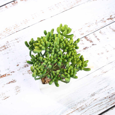 Set of 3 | Assorted Fake Succulents in Pot | 7'' Assorted Stonecrop Artificial Plants with Pots