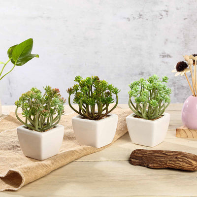 Set of 3 | 7"