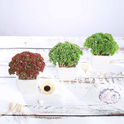 Set of 3 | Assorted Fake Succulents in Pot | 6'' Assorted Autumn Joy Sedum Artificial Plants with Pots