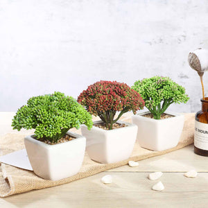 Assorted Fake Succulents in Pot | 6'' Assorted Autumn Joy Sedum Artificial Plants with Pots