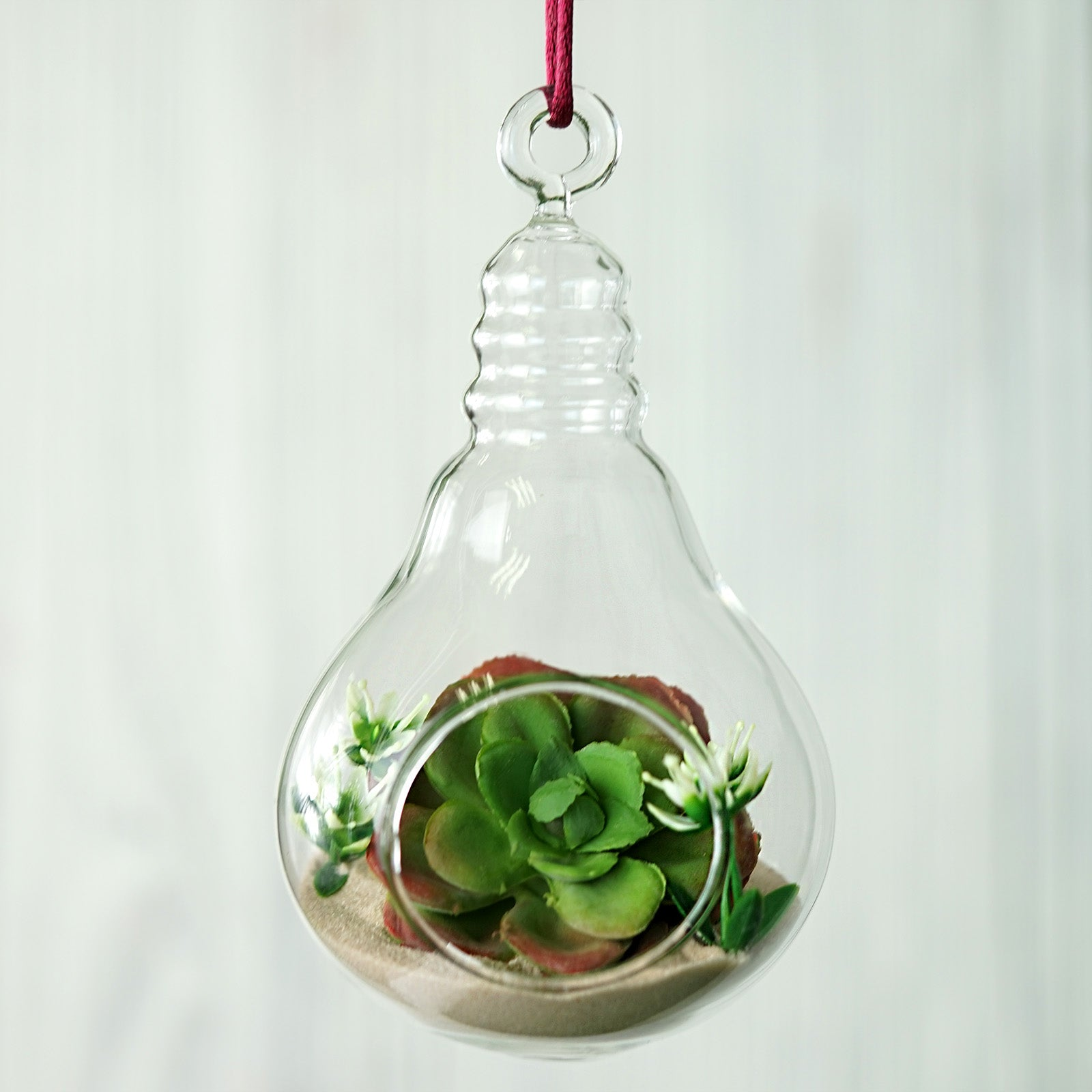 Set Of 6 5 Air Plant Glass Terrarium Light Bulb Hanging Plant