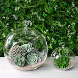 "Set of 4 | 7"" Air Plant Glass Terrarium Globe Hanging Plant Holders"