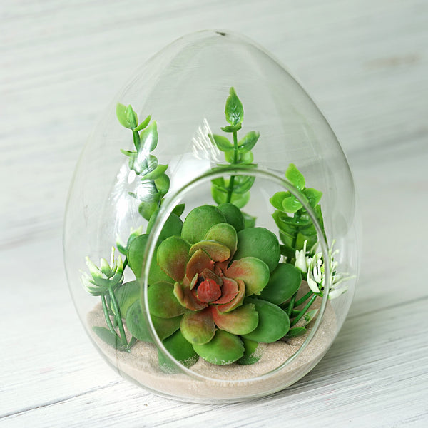 "Set of 6 | 6"" Air EGG Shaped Plant Holders Glass Terrariums Wholesale"