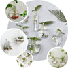 3 Pack | Classic Round Glass Wall Vase | Indoor Wall Mounted Planters | Hanging Terrariums