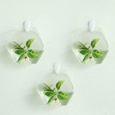 3 Pack | Hexagon Glass Wall Vase | Indoor Wall Mounted Planters | Hanging Terrariums