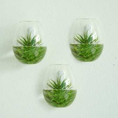 3 Pack | Egg Shaped Glass Wall Vase | Indoor Wall Mounted Planters | Hanging Terrariums