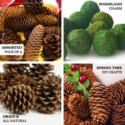 Pack of 9 | Natural Pine Cones and Moss Balls Assorted Potpourri Vase Fillers Bowl DIY Table Decorations