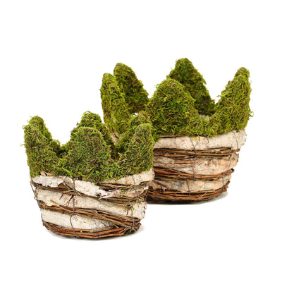 "Set of 2 | Moss & Birch Wood Weaved Crown Rustic Planter Box - 6"" & 7"""