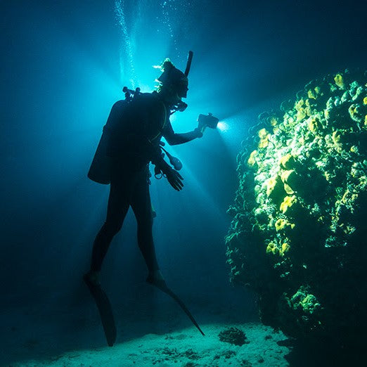 1 Night Specialty Training Dive